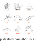 cereal food grain 46567633