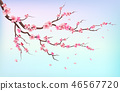 Japan sakura branches with cherry blossom flowers and falling petals isolated on white background 46567720