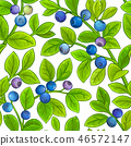 berry, vector, blueberry 46572147