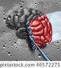 大脑 头脑 基因 46572275