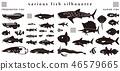 คอลเลกชันวัสดุภาพเงาปลา 46579665