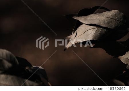 Dead leaves 46580862