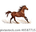 Brown horse illustration, digital painting 46587715