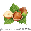 Hazelnuts and leaves 46587720