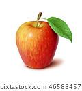 apple fruit fruits 46588457