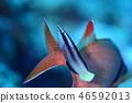 해수어 청소 장면 46592013