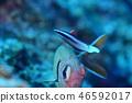 해수어 청소 장면 46592017