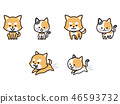 애완견과 고양이 46593732
