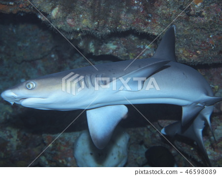 Shark living in a cave 46598089
