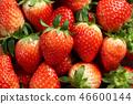 딸기, 스트로베리, 과일 46600144