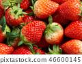 딸기, 스트로베리, 과일 46600145