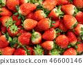 딸기, 스트로베리, 과일 46600146