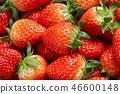 딸기, 스트로베리, 과일 46600148