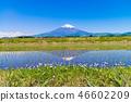 (시즈오카 현) 계단식와 후지산 46602209