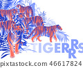 Graphic design with tigers standing, walking and roaring among the exotic leaves and trees 46617824