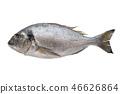 Fresh dorado fish. Top view, isolated on white. 46626864
