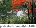 Autumn leaves 46634402