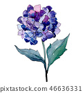 Blue purle hydrangea botanical flower. Watercolor background illustration set. Isolated flower 46636331