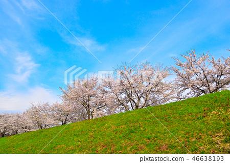 Sakurakage Tochigiuchi河岸 46638193