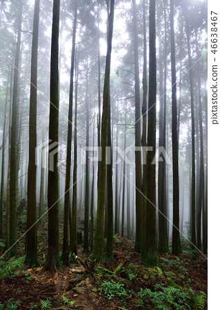 樹與霧 46638467