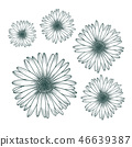 Chamomile daisy close up top view 46639387