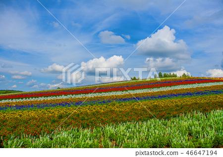 꽃밭 46647194