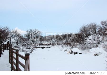 1100고지,습지,설경,눈꽃,눈, 46654835