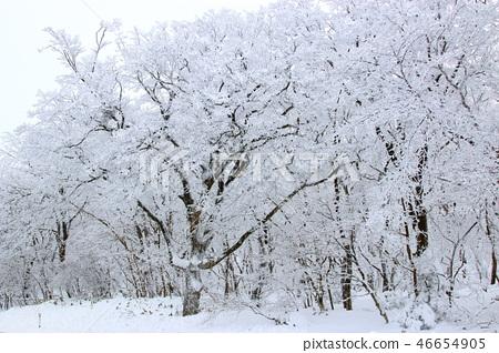 1100고지,습지,설경,눈꽃,눈, 46654905