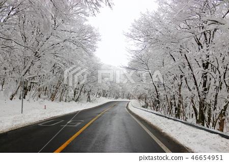 1100고지,습지,설경,눈꽃,눈, 46654951