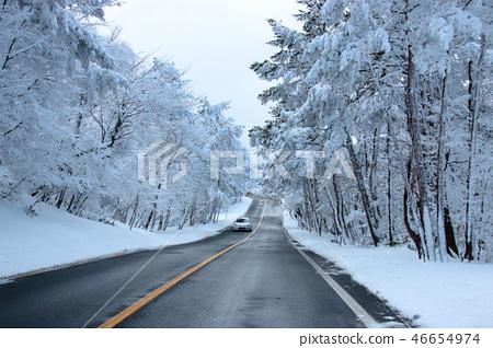 1100고지,습지,설경,눈꽃,눈, 46654974
