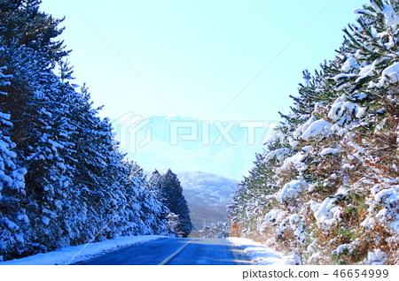 1100고지,습지,설경,눈꽃,눈, 46654999
