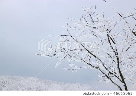 1100고지,습지,설경,눈꽃,눈, 46655063