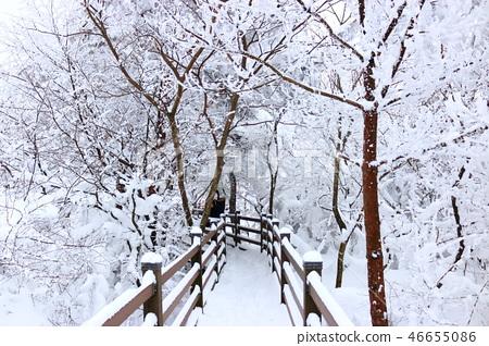 1100고지,습지,설경,눈꽃,눈, 46655086