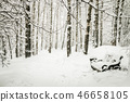 bench and trees in the snow in the snow  46658105
