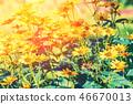 Vintage flower background at sunset light 46670013