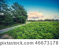 Rural landscape, dirt road among forest and field 46673178