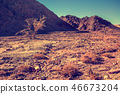Dry river bed with trees. Road to the Red Canyon 46673204