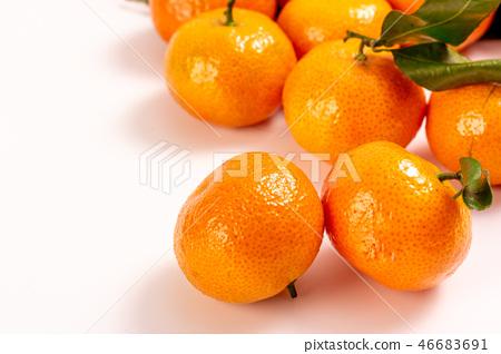 新鮮砂糖橘 46683691