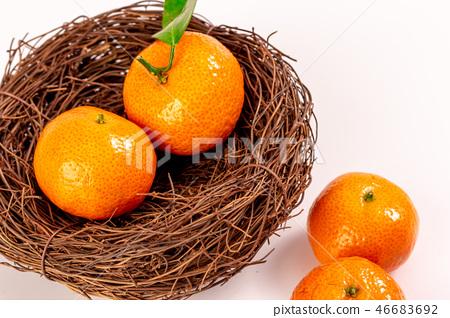 新鮮砂糖橘 46683692