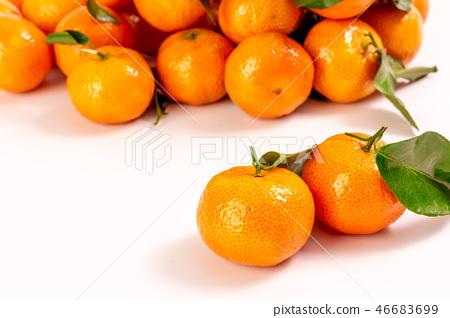 新鮮砂糖橘 46683699