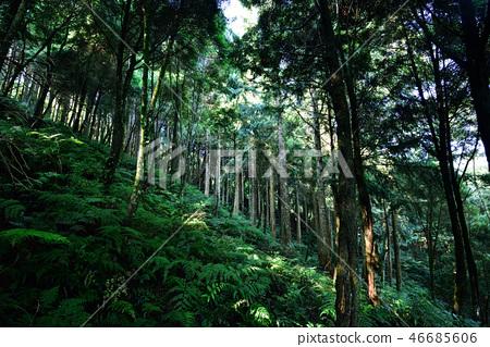 森林 46685606