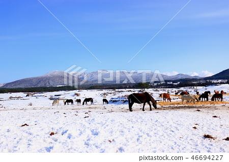 목장,방목지,설경,농촌,중산간,한라산, 46694227