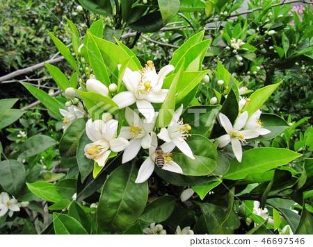 花果植物 46697546
