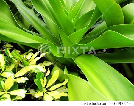 花果植物 46697572