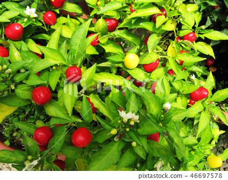 花果植物 46697578