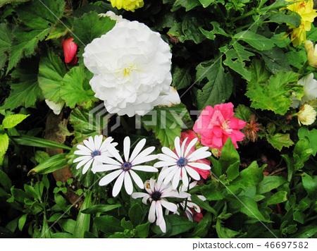 花果植物 46697582