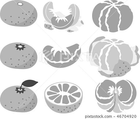 Orange orange fruits citrus illustration 46704920
