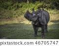 Rhino in Chitwan 46705747