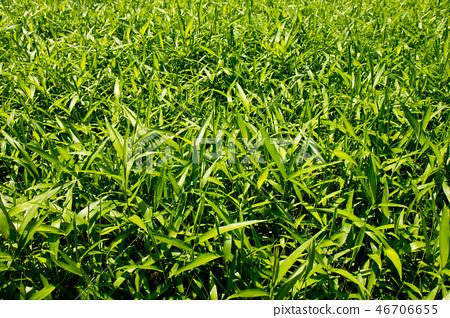 햇살 받은 싱그러운 풀잎 배경, 봄 풍경 46706655