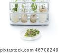 Petri dish with growing in vitro Sundew 46708249